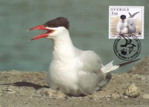 Swedish Caspian Tern Bird WWF Stamp FDC Postcard