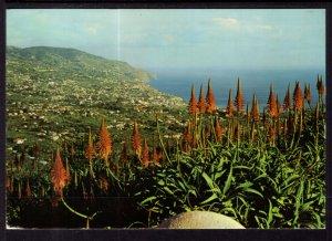 Fuchal,Madeira BIN