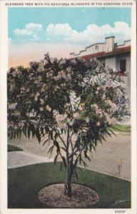 Florida Oleander Tree With Beautiful Blossoms 1931