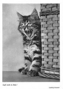 Katze Cat Lass mich in Ruh! Ludwig Schuster
