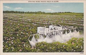 Tractor Spraying Maine Potato Field In Bloom