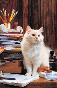 North Shore Animal League Cat Unused