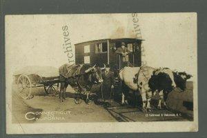RP c1910s CROSS-COUNTRY TRAVELER Oxen Team CONNECTICUT to CALIFORNIA Walker