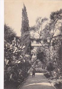 Algeria Algiers Hotel St George Path In The Garden