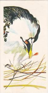 Brooke Bond Vintage Trade Card Vanishing Wildlife 1978 No 20 Bearded Vulture