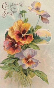 Pansy Flowers , 1910