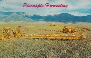 Hawaii Honolulu Pineapple Harvesting