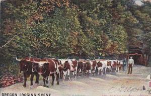 Oregon Logging Scene With Oxen 1905