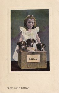 1900-1910's; Ready For The Show, Little Girl With Three Puppies