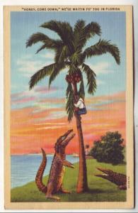 P529 JLs vintage comic alligators honey come down we waiting fo you in florida