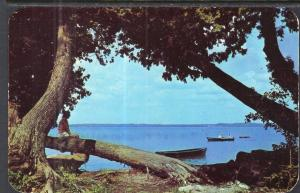 Summer at the Lake,MI BIN