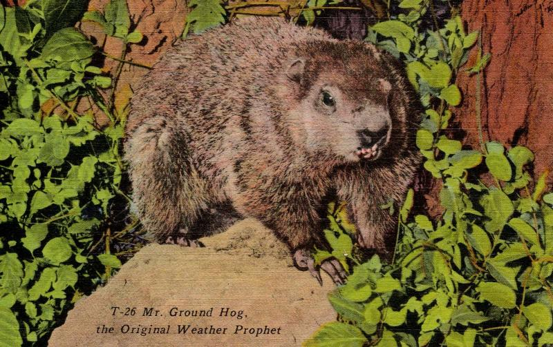 Mr. Ground Hog-- The Original Weather Prophet
