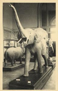 belgium, TERVUEREN, Musée du Congo Belge, Museum (1930s) Elephant Postcard