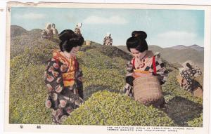 Japan , 1940s ; The Tea-Picking Girls in Traditional Kimonos w/Bamboo Baskets