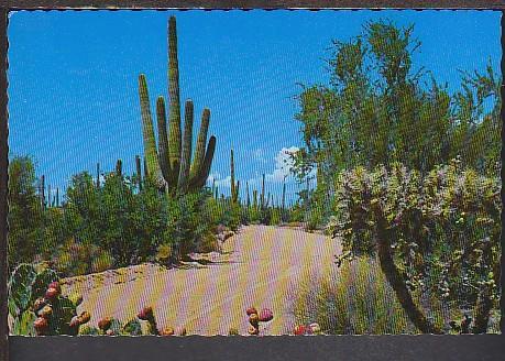 Cactus Postcard BIN