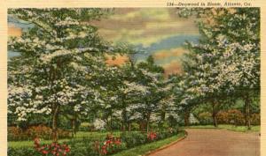 GA - Atlanta, Dogwood in Bloom