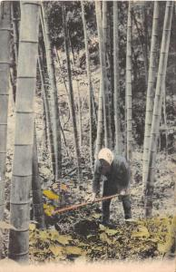 Japan Man Tending Bamboo Garden Antique Postcard J76102