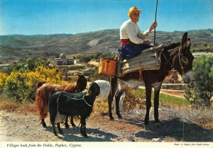 Cyprus Paphos villager riding donkey back from the fields goats postcard