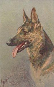 AS: Alsatlan Wolfhound , 1920-30s