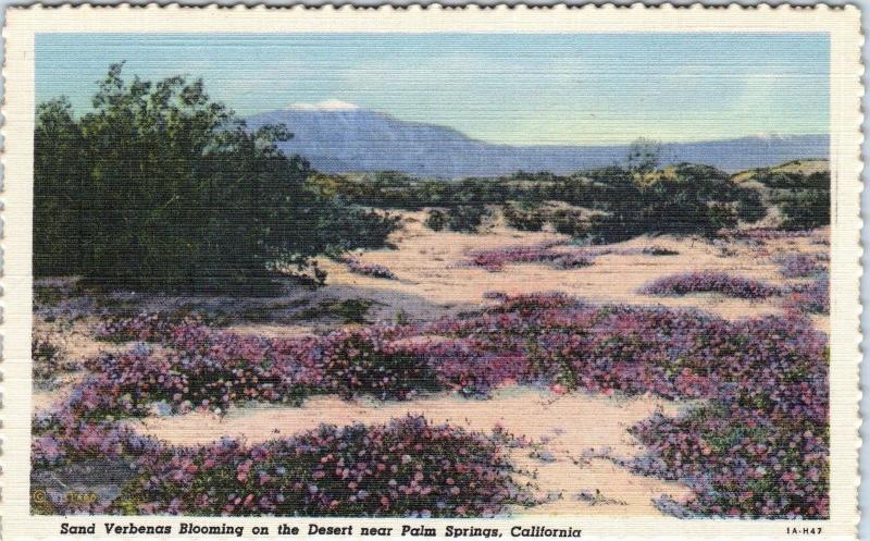 Palm springs ca california 2 postcards verbenas spring flowers palm springs ca california 2 postcards verbenas spring flowers c1940s mightylinksfo