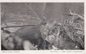 Beaver - The First engineer , 1949