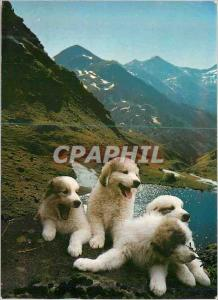 Postcard Modern Valls d'Andorra Estany Tristaina Tristaina Lake Dogs