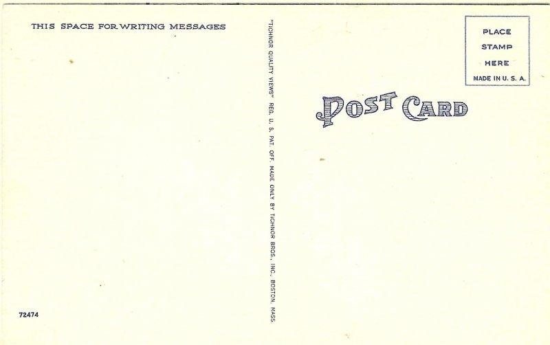 1940's Alligator Egg Hatching in Florida Linen Postcard