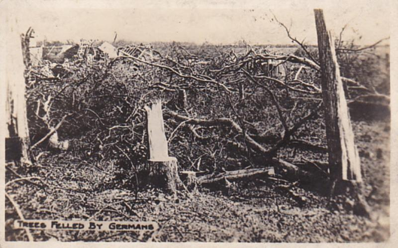 RP: War 1914-18 ; Trees felled by the Germans