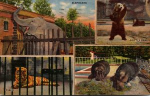 Tennessee Memphis Zoo Elephants Tiger Grizzly Bears and Hippopotamuses 1955 C...