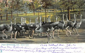 Ostrich Farm, Hot Springs, Arkansas, Early Tuck's Postcard, Used in 1906