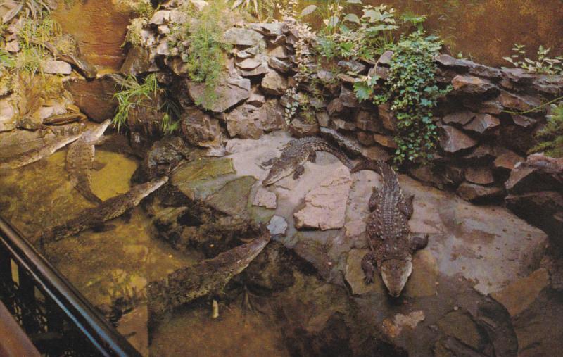 Crocodiles Stanley Park Aquarium , VANCOUVER , B.C. , Canada , 50-60s