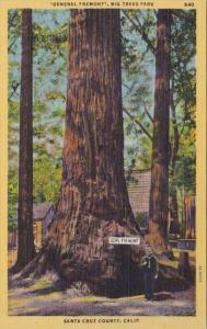 California Santa Cruz General Fremont Big Trees Park
