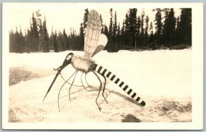 YUKON CANADA EXAGGERATED MOSQUITO VINTAGE REAL PHOTO POSTCARD RPPC