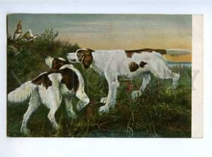 183002 RUSSIA J. von Holst SETTER dogs hunt rabbits Vintage