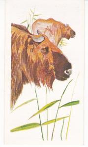 Trade Card Brooke Oxo Vanishing Wildlife No 13 Golden Takin