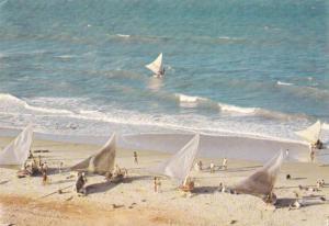 Sailboats, Jangadas, Fortaleza, Brasil, PU-1973