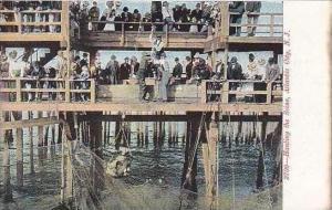New Jersey Atlantic City Hauling The Seine