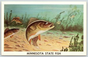 Minnesota State Fish~Walleye Chasing Minnows~Roger Preuss Artist~c1965 Postcard