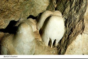 New Mexico Carlsbad Caverns National Park Bashful Elephant
