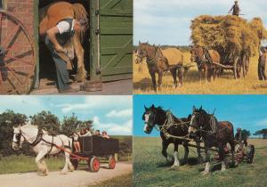 Levisham Shire Horse Rides Pickering Yorkshire Blacksmith 4x Postcard