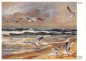 Walther Klemm, Mowen Birds Sea Waves