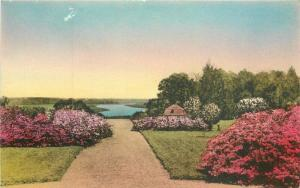 Charleston South Carolina View Ruins Old Mansion Postcard Middleton 2847