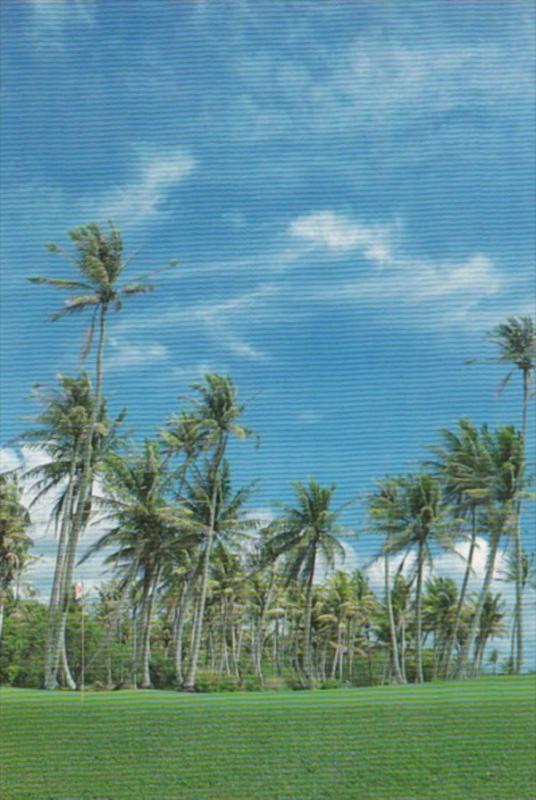 Micronesia Palm Trees