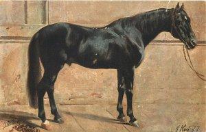 Black horse G. Koch signed eralypostcard Raphael Tuck