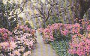 Orton Plantation Gardens Wilmington North Carolina