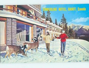 Unused Pre-1980 SKIING - SKIERS FEED DEER AT TIMBERLINE HOTEL Banff AB B0757
