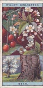 Wills Vintage Cigarette Card Flowering Trees &  Shrubs 1924 No 21 Gean