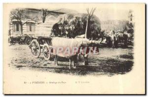 Old Postcard hitch country Pyrenees Oxen