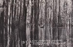 Canoeing In Swamp Cypress Gardens Charleston South Carolina Real Photo