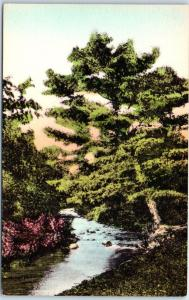 Pocono Manor Pennsylvania Postcard Leaning Pine Swiftwater Stream HAND-COLORED
